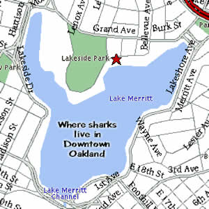 The Lake Merritt Institute: Contact Us